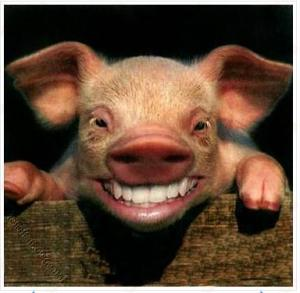 flu-babi-primordialgrafis-blog